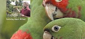 دانلود فیلم مستند طوطی های آزاد تپه تلگراف