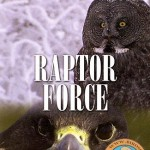 دانلود فیلم مستند پرندگان شکاری