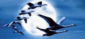 دانلود فیلم مستند مهاجرت پرندگان