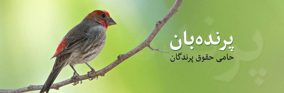 پرنده بان